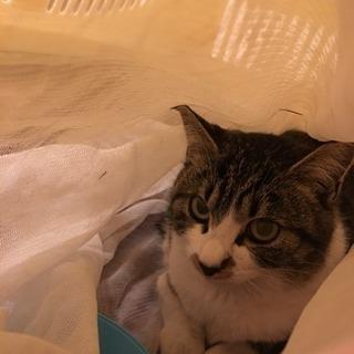 避妊済み🐱かわいい子猫(♀5ヶ月)