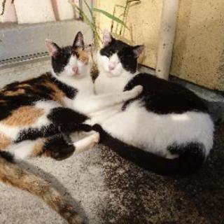 夫婦猫の里親を探しています。