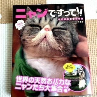 【引越し】猫のおもしろ写真集