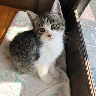 生後2ヶ月(9/12) 子猫里親さん探し