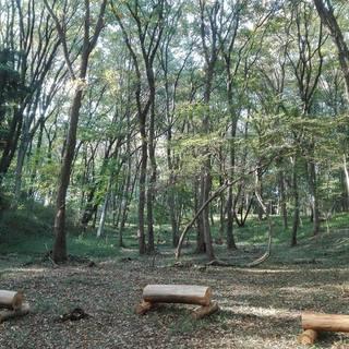 深まる秋の森のハープコンサート