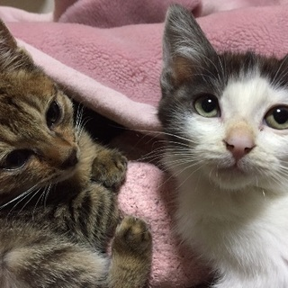 3ヶ月の可愛い2匹の子猫 里親さん探しています