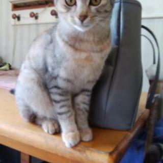 今年の春に生まれた猫三匹 里親急募