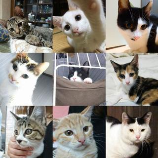 ☆可愛い保護猫の譲渡会開催☆