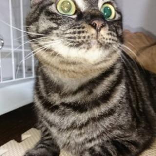 【急募】🐱猫ちゃん里親募集🐾