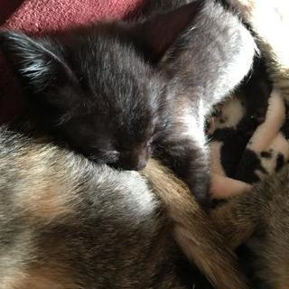 約2ヶ月の子猫です(*^^*)