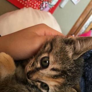 生後2ヶ月の子猫です(*^^*)