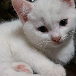 白ネコちゃん2世代