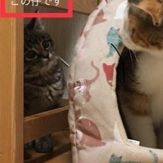 チャームポイントはクリクリなお目目 仔猫