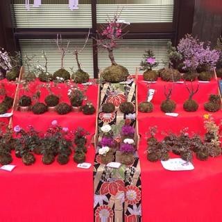 【急募】苔玉販売スタッフ【今注目の苔玉!】