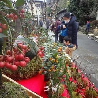 【急募】苔玉販売スタッフ【井之頭公園すぐ】