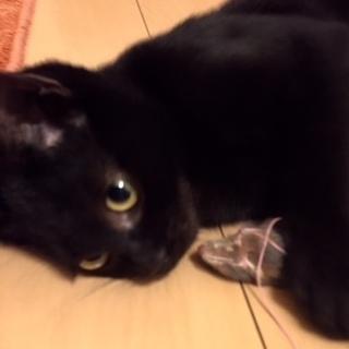かわいい子猫を家族に迎えませんか☆