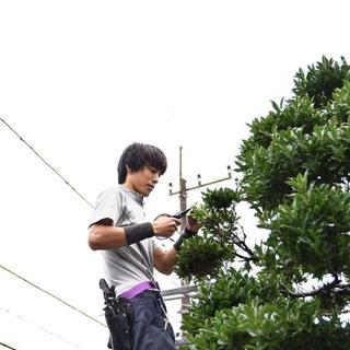 神奈川~東京の植木屋 お庭のお手入れ致します!