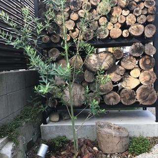 薪、原木、間伐材を譲って下さい
