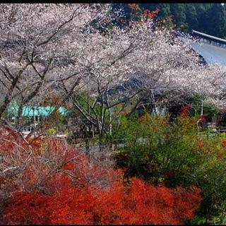 🔴三河湖🔴紅葉ウォーキング(⌒0⌒...