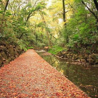 11月25日(11/25)  ここが東京なの!?大自然の中でマイナ...