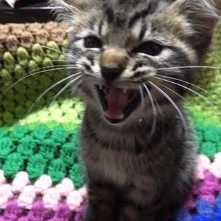 甘えん坊の子猫!