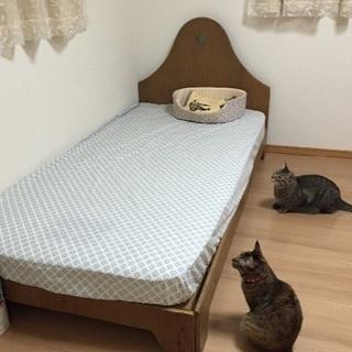 『ねこ部屋大阪豊中』一時お預かり◎猫ペットホテル