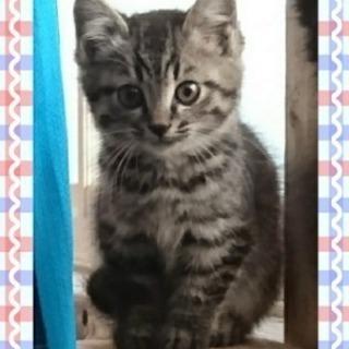 生後2ヶ月ほど。甘えん坊で活発な子猫ちゃん③