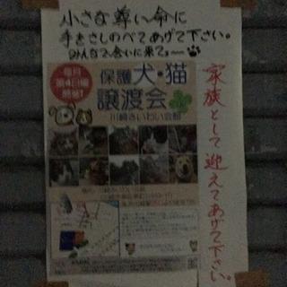 11月26日(日)保護犬猫譲渡会in川崎