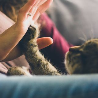 猫専門店 キャットシッター☆クリスマス・年末年始の準備はお済みですか?