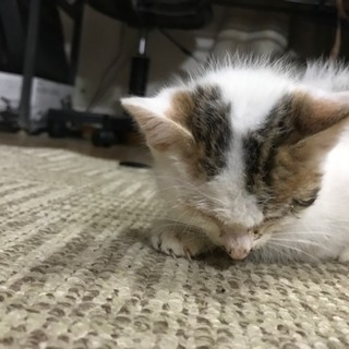みつかりました。幸せに生きて行けますように。茨城県★子猫