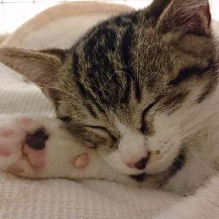 迷子の子猫、里親募集しています。