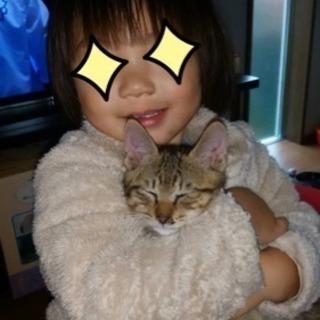 1匹になってしまいましたので急募です☆生後3ヶ月☆元気な猫ちゃん☆
