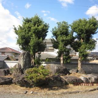 庭木(槙の木) 庭石