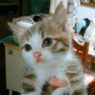 9月生まれの子猫♪2カ月の女の子♪里親様募集