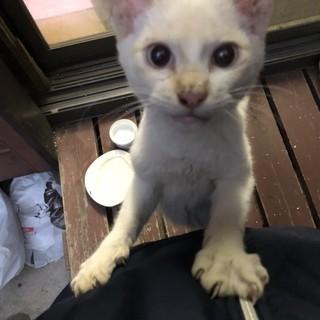 白い猫ぴーやんです。