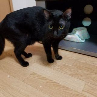 イケメン黒猫❗
