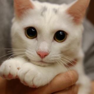美人な白ニャンコちゃん!