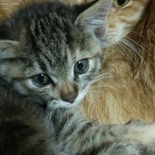 札幌にて保護猫のお見合い会開催 12月10日