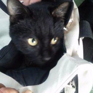 一才位の黒猫君 👦男の子 元気印😆❗