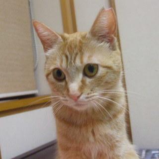 美猫  2才の女の子(予約中)