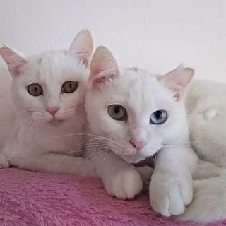 雪のような姉妹