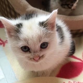 11月生まれの子猫です。