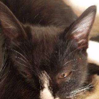 生後3ヵ月のとてもかわいい仔猫です!