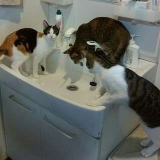 子猫3匹兄弟です
