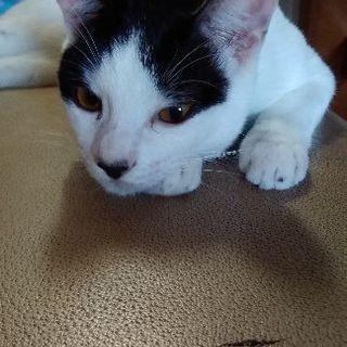 8ヵ月の雄猫