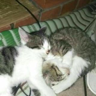猫、里親募集