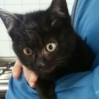 黒猫坊や もっくん♪ 3ヶ月半~4ヶ月位