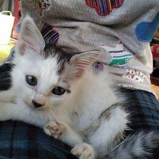 生後1ヶ月前後の子猫ちゃん
