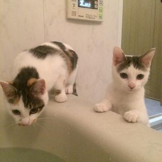双子6月生まれ三毛猫とキジ猫