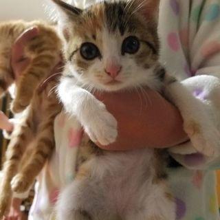 生後2ヶ月の子猫3兄弟