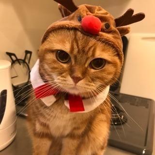 急募!猫の輸血提供お願いします!!