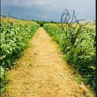 草刈り・伐採・お庭