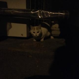 静岡市に住んでいる猫好きの方