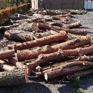 薪原木 詰み放題 (松、杉、檜など)